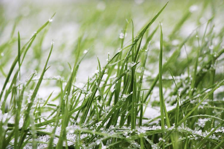 A quelle taille tondre sa pelouse ?